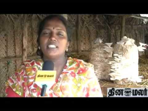 Mushroom Cultivation video tamil