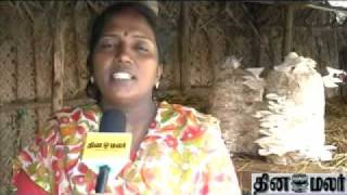 Mushroom Cultivation video tamil