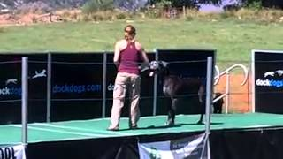 Cain the Great Dane jumping 18