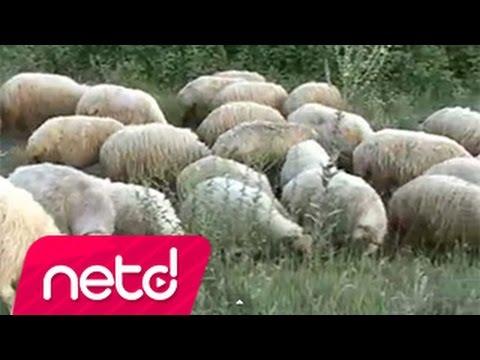 Akkuşlu Metin - Çoban Ali