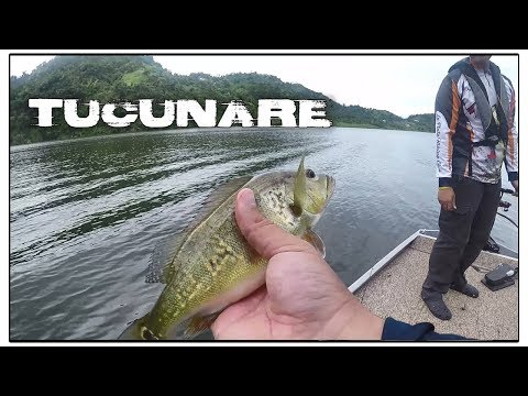 Pesca De Tucunare En Bote || Lago La Plata, Puerto Rico || ft. Javier & Fishing The Island