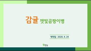 [팜한농] 감귤 잿빛곰팡이병