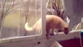 Кошки снова отжигают!!!!!!!!!!!!!!!!!!!!!