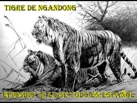 Download Tigre de Ngandong (Panthera Tigris Soloensis) - Lo sé todo en Español
