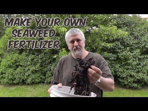 Make Your Own Seaweed Fertilizer