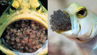 15 Most Incredible Births In The Animal World