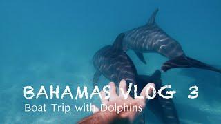 Mit Delfinen schnorcheln auf den Bahamas 🐬| BAHAMAS VLOG #3