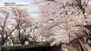 祖師谷地区紹介動画『Tohode〜祖師谷の自然と心弾むスポットに出会えるコース』