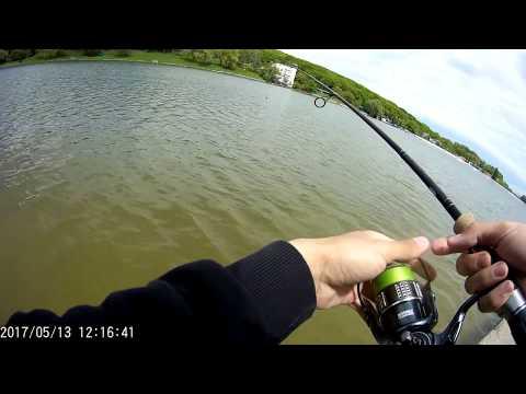 Рыбалка ставрополь комсомольский пруд