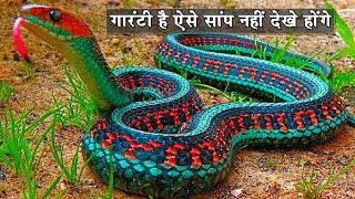 ये सांप आपने कभी नहीं देखे होंगे10 Most Beautiful Snakes In The World|Colorful Snakes|gorgeous snake
