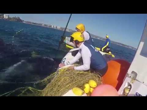 Mother Humpback Stays by Calf While Rescuers Free it From Shark Net