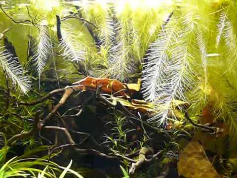 Nature aquarium deepcube 120l tank youtube for Aquarium 120l