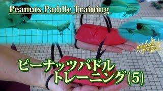 今回は「ピーナッツパドルを使ったトレーニング(5)〜自由形スイム〜」...