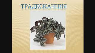 6 класс (д) Урок №1 - Комнатные растения. Интерьер.
