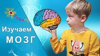Всё о мозге для детей. Головной мозг птиц и животных. Обманы зрения и флюористенция. Эволюция мозга.