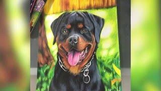 Dibujando a Karim mi perro Rottweiler | HaroldArtist