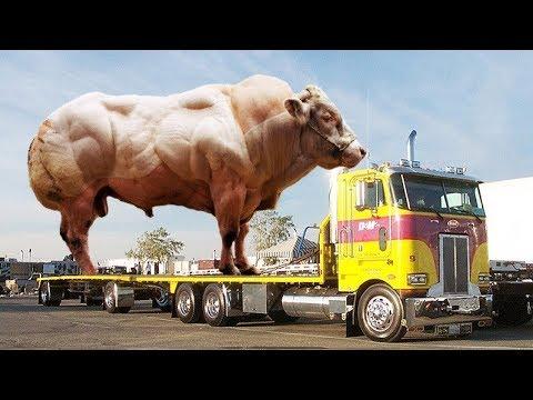 عندما تتدخل التكنولوجيا فى تطوير الحيوانات تكون النتيجة اغرب من الخيال thumbnail