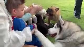 เมื่อเด็กๆมาให้อาหารพะยูน #ภิเสือภิสิงห์