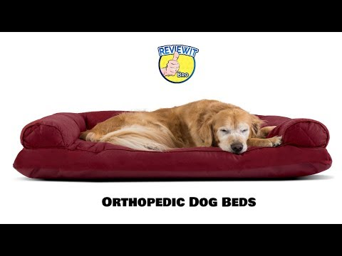 best-orthopedic-dog-beds-2019-on-amazon-[must-buy-top-10-products]