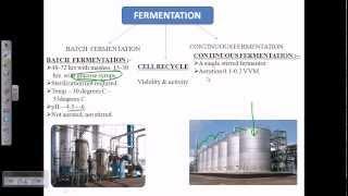 Alcohol fermentation overview