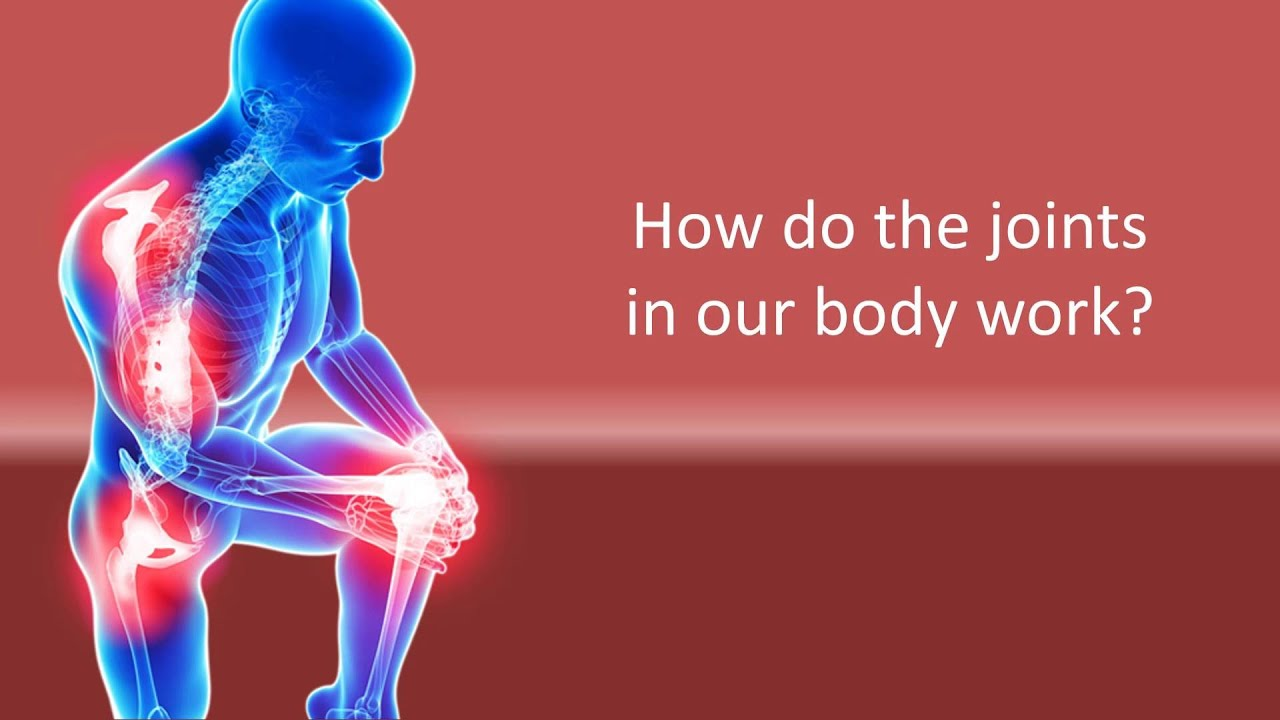 How Do The Joints In Our Body Work Youtube