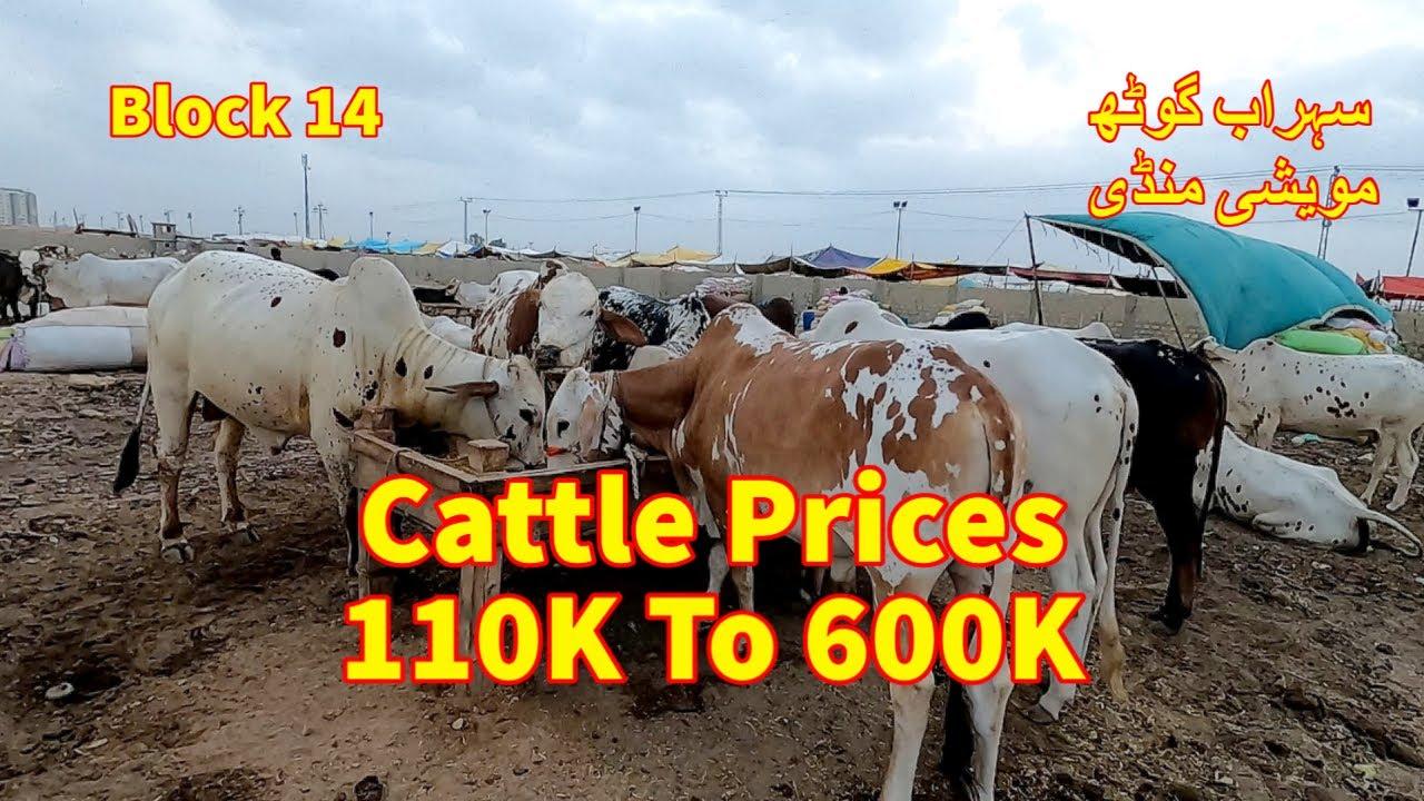 Cattle Prices Sohrab Goth Maweshi Mandi