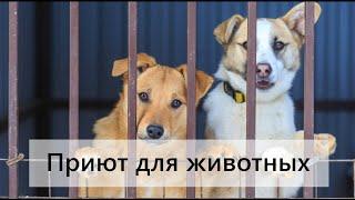 Приют для животных в городе Октябрьский