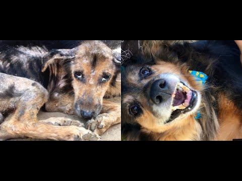 Dog Left To Die- Look at Him Now!