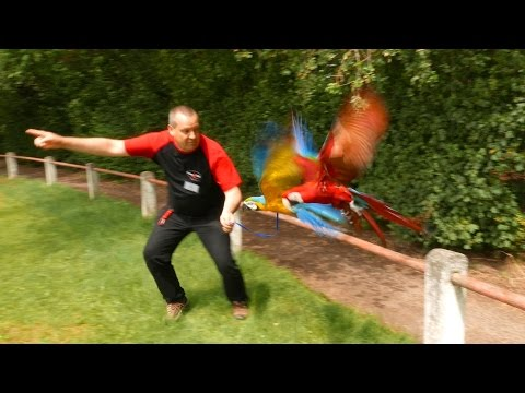German Flight Club Harness Flying Parrots in Germany (4K Video)
