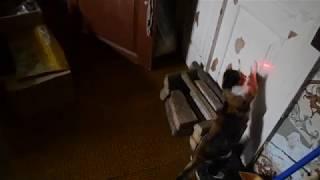 Коты бегают за лазером)