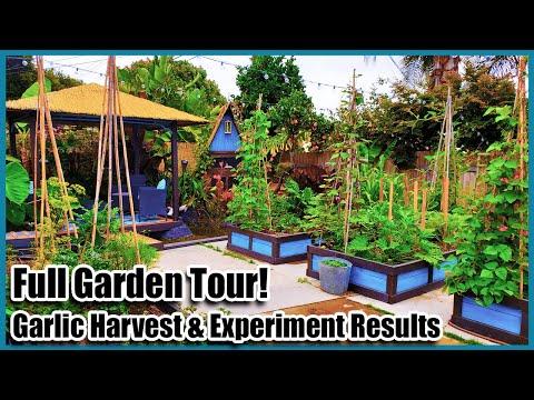 full-garden-tour-2020-&-garlic-harvest-&-experiment-results!