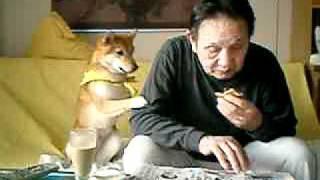 柴犬もこちゃんとおじいちゃんのどら焼き攻防戦
