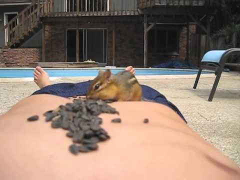 Turning Chipmunks into Pets