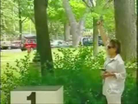 Video clip  Chay chet chim