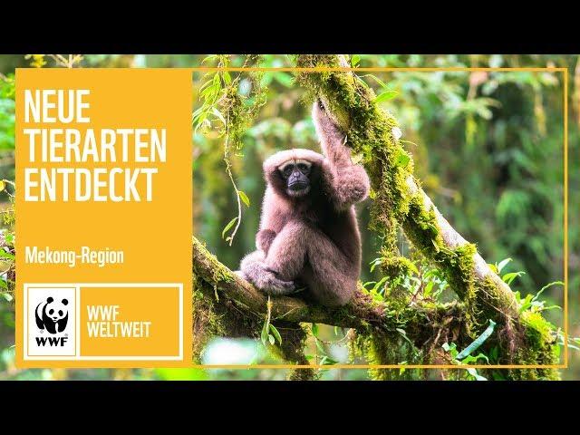 Mekong: Neue Tierarten entdeckt | WWF Weltweit | WWF Deutschland