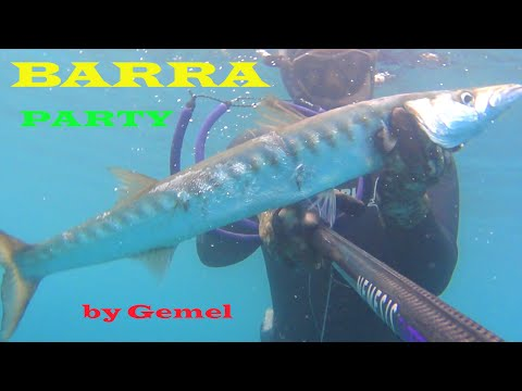 Due Barracuda In Acqua Bassa - Pesca Subacquea In Apnea - Spearfishing Gemel