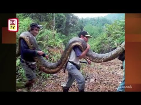Penemuan 'Anaconda Sarawak'