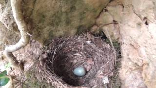birdnesting 2017,  found a couple of possibilitys
