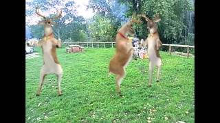 Un día raro de campo - La barbacoa navideña. Villancico gracioso. Animales bailando fxguru