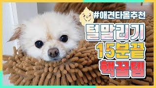 강아지 털말리기 15분끝 핵꿀템 아마존닷컴 타올판매부분…