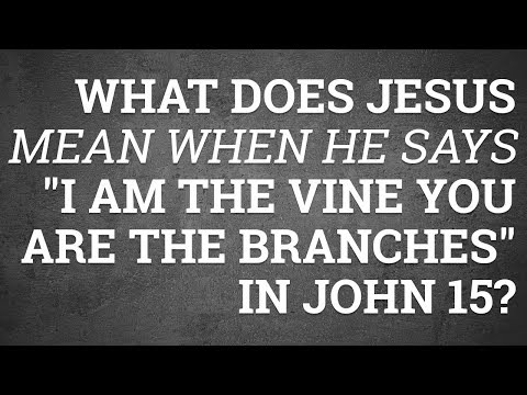 """What Does Jesus Mean When He Says """"I Am the Vine You Are the Branches"""" in John 15?"""