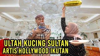 ULANG TAHUN KUCING SULTAN , ARTIS HOLLYWOOD SAMPAI IKUTAN