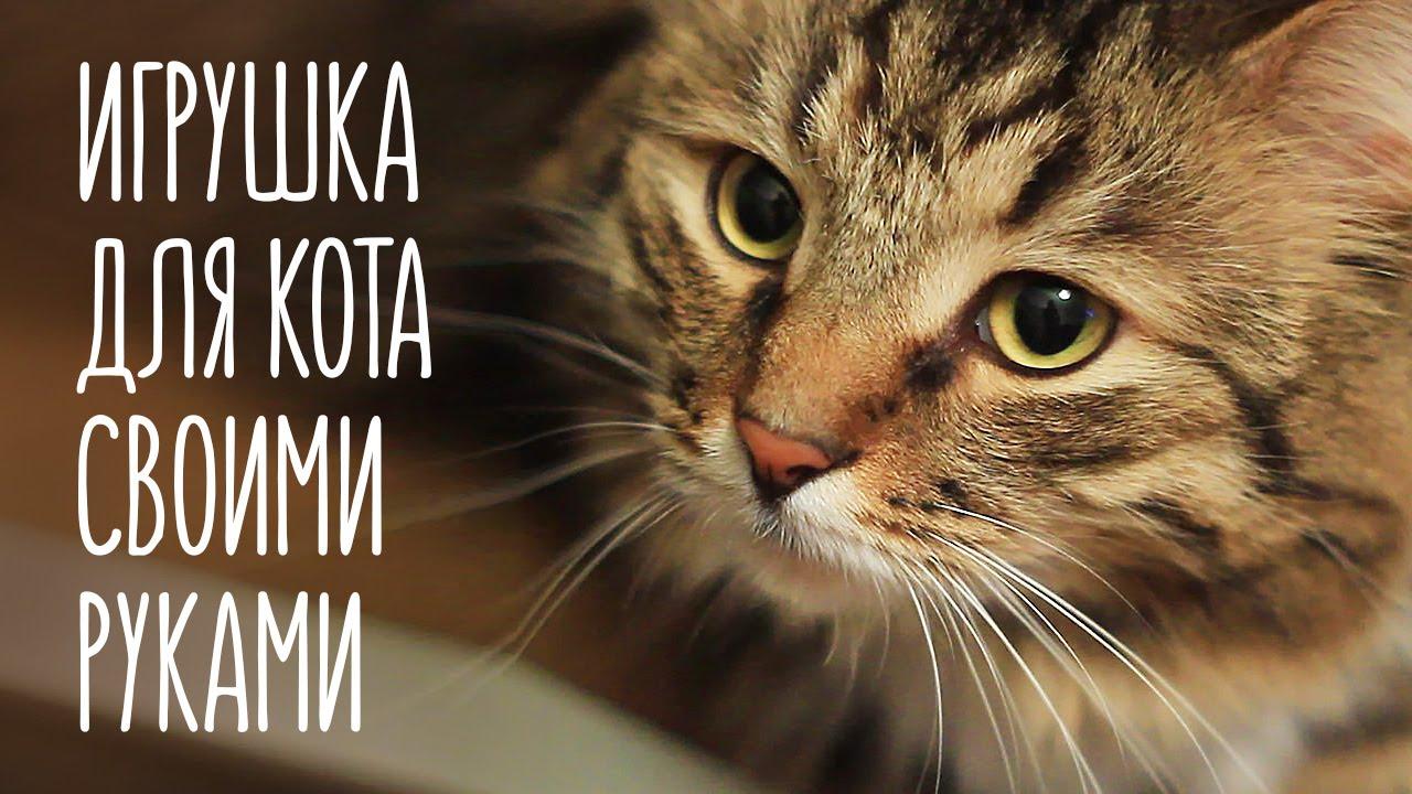 Какие игрушки можно сделать для котенка фото 181