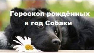 Гороскоп рождённых в год Собаки !