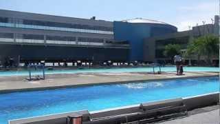 Sea Lion Show Manila Ocean Park - Manila Tour - WOW Philippines Travel Agency