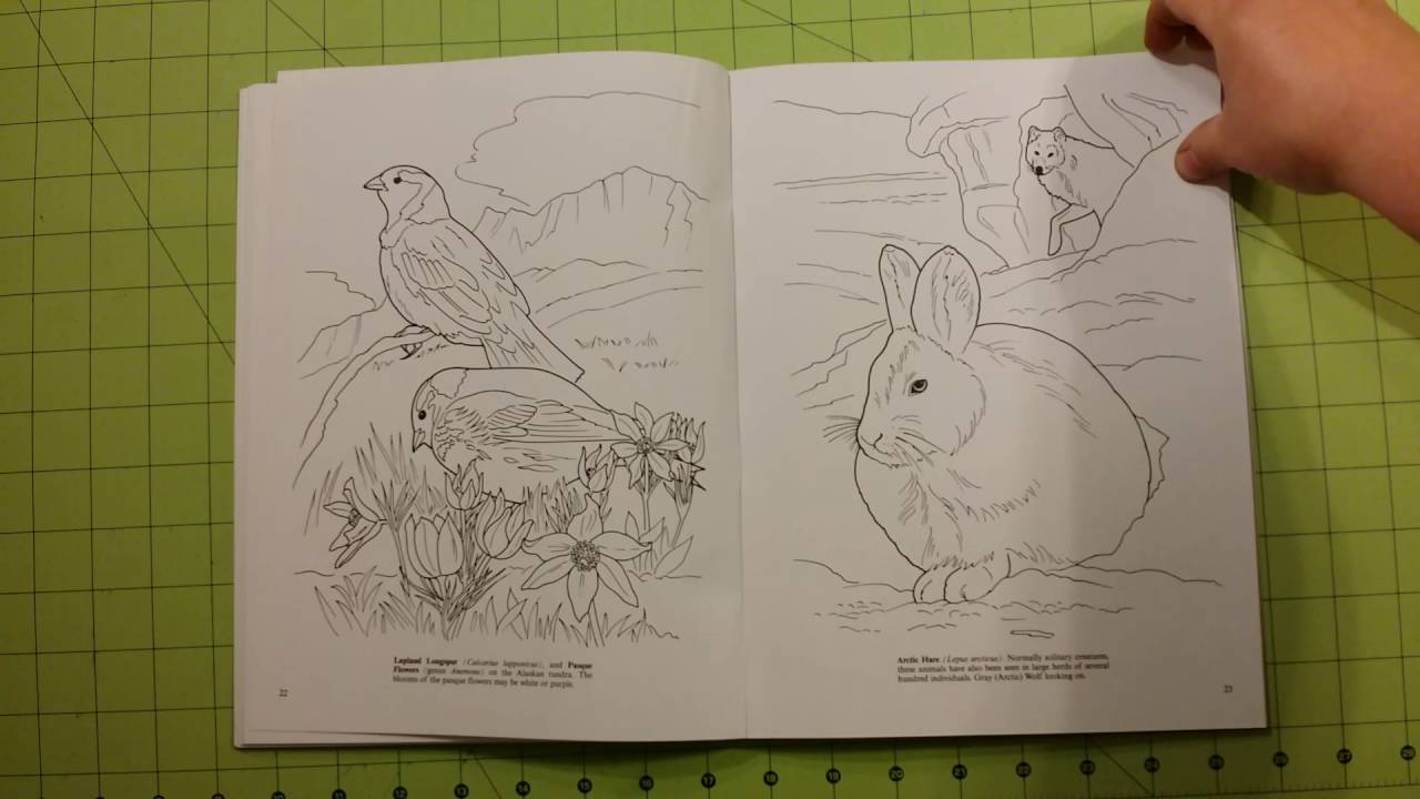 The Arctic and antarctic life Dover coloring book review adult ...