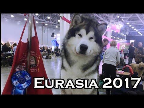 Eurasia 2017 (RKF President Cup)