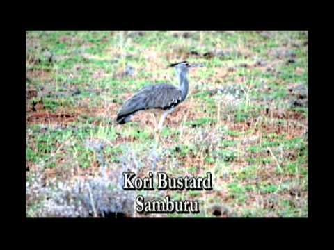 Birds of East African Bush final cut