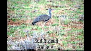 Birds of East African Bush final cut