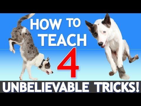 How to Teach 4 UNBELIEVABLE Tricks! Featuring America's Got Talent Star Sara Carson!
